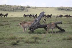 Mara Ngenche Safari Camp - Masai Mara (29)