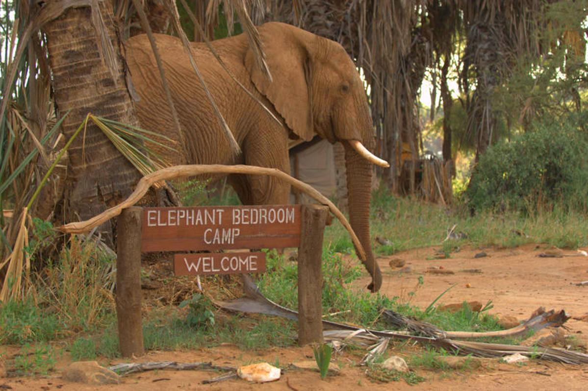 Elephant Bedroom Camp - Samburu (2)