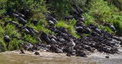 Mara Ngenche Safari Camp - Masai Mara (30)