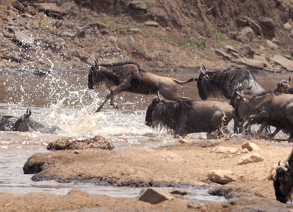 4 Nights / 5 Days Nakuru - Mara Safari