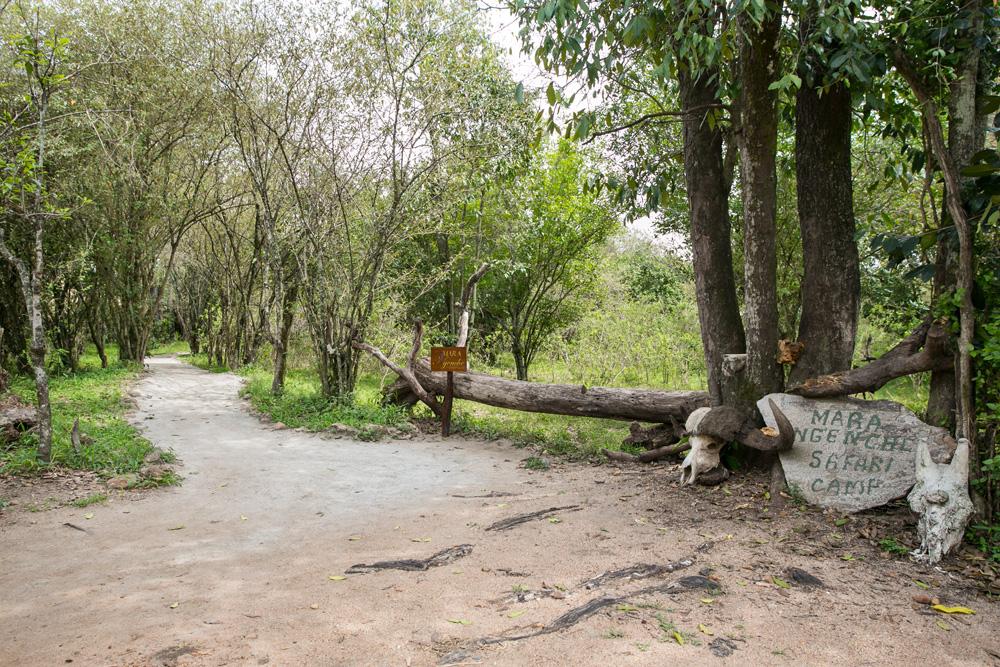 Mara Ngenche Safari Camp - Masai Mara (3)
