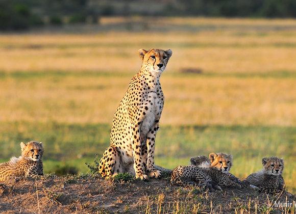 5 Nights / 6 Days Samburu - Masai Mara Highlights