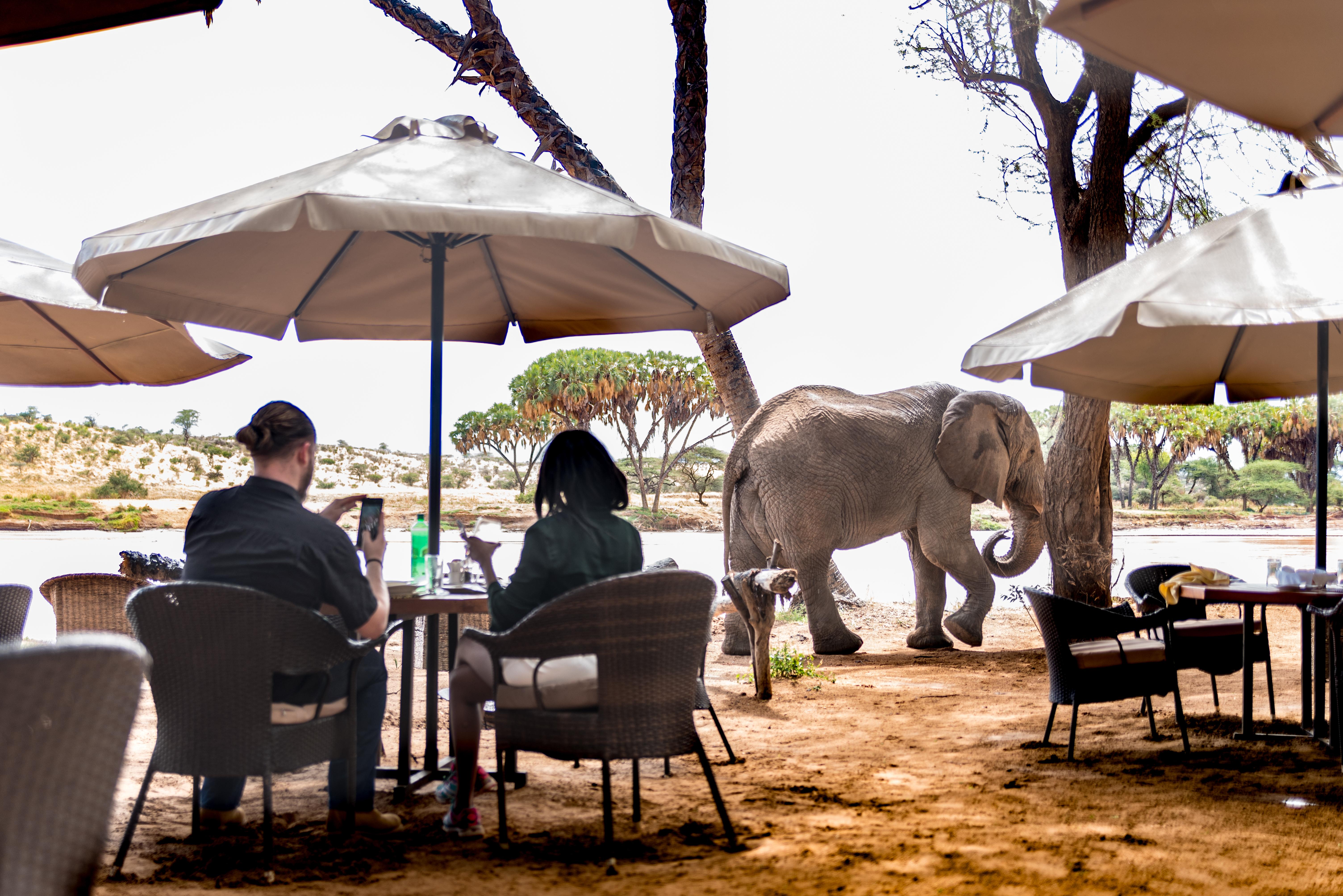 Elephant Bedroom Camp Breakfast Area