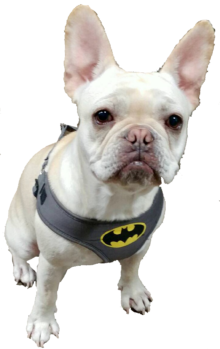 Frenchie Batman