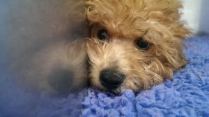 Pet insurance - Make sure you have it!