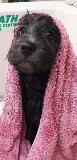 Diva Dogs grooming