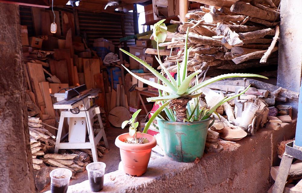 Cacti & Wood in Workshop