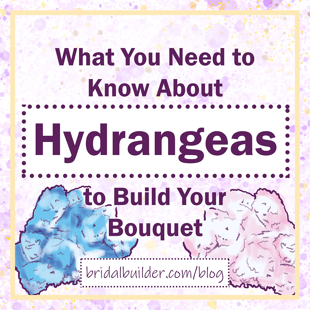 """Title: """"What You Need to Know About Hydrangeas to Build Your Bouquet"""" with a gold border and two hand drawn bunches of hydrangeas; one blue, one pink."""