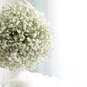 A large bunch of white baby's breath sits in a clear glass vase in front of a white background and a bright white window.