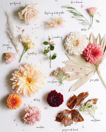 Various white, peach, and pink blooms sit on a white surface with black, handwritten labels next to each flower.