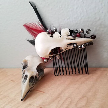 A bird skull sits with another accented bird skull that has been attached to a black hair comb. The hair comb is accented with silver berries and black and red feathers.