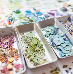 Dried and pressed flowers are separated by color into small white dishes. The presented colors are pink/purple, green, and blue.