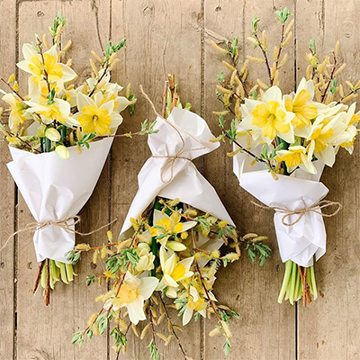 Three bouquets of yellow daffodils are wrapped in white cloth and twine while laying on a plain wood background. It looks rustic.