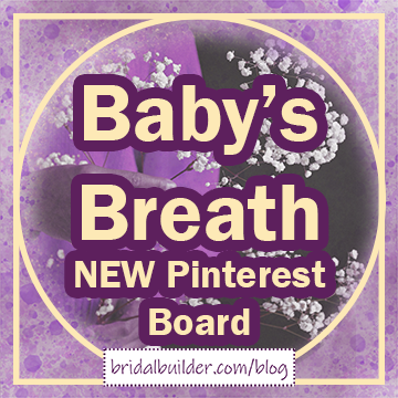 "Title: ""Baby's Breath NEW Pinterest Board"" in gold and purple. There's a border of gold around the edge of the graphic and a purple watercolor texture in the background. There is also a muted photo of a woman holding a large sprig of white baby's breath behind the text."