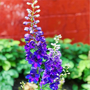 A purple-blue sprig of delphinium/larkspur sits in front of a red brick wall and some green foliage.