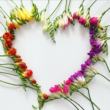 A collection of freesia flowers, still on the stem, arranged in a heart-shape in a rainbow of colors.