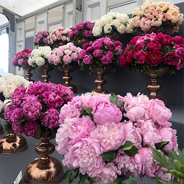 Two rows of pink and red shades of vased flowers sit on tiered stairs.
