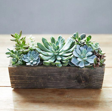 Large Mixed Succulent Planter