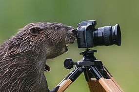 AnimalPortrait.jpg