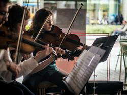 Violins and viola
