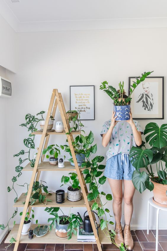 6 THINGS YOU DIDN'T KNOW PLANTS COULD DO FOR YOUR HOME