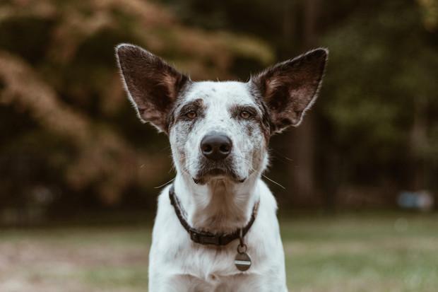 How to Design a Pet Friendly Home