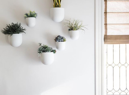 6 Reasons Why You Need Plants in Your Home