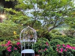 萬里瑪鋉溪畔杜鵑花開,打造台版屋久島小田汲川