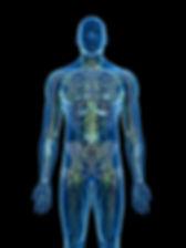 Rockwall Lymphatics - The Lymph Sytem