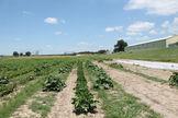 2019 Opals Farm Acre 1 developed