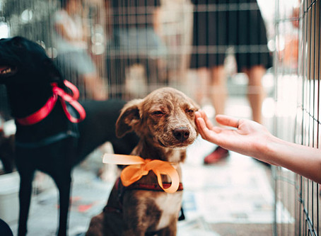 Gifting Pets for the Holidays
