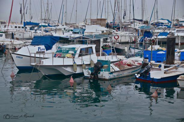 שלווה בנמל יפו
