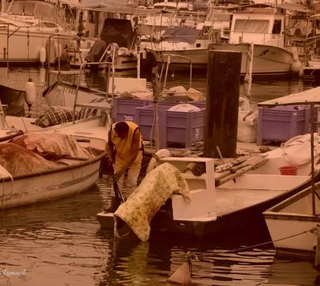 תכונה ערה בנמל יפו