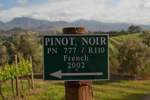 Clone 777 Pinot Noir