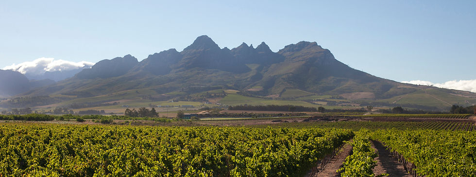 Helderberg from the vineyards.jpg