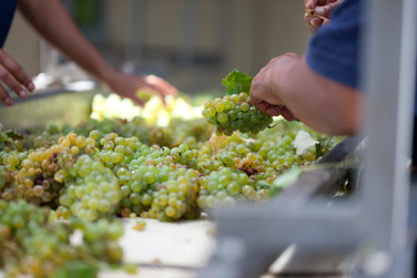 sorting the Radford Dale Renaissance of Chenin Blanc