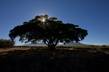 The Land of Hope Tree