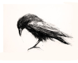 Crow also
