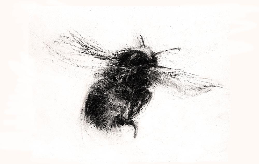 Bee energy