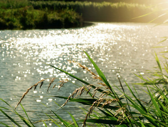 Summer solstice swim