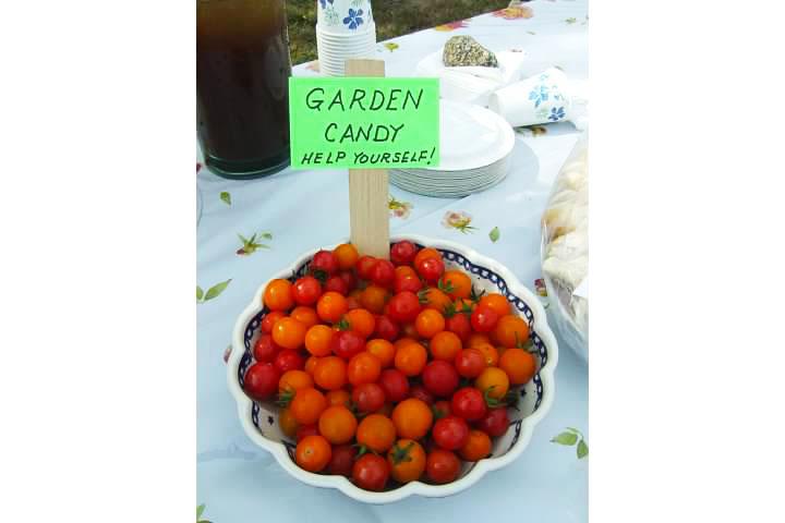 Community garden tomatoes2