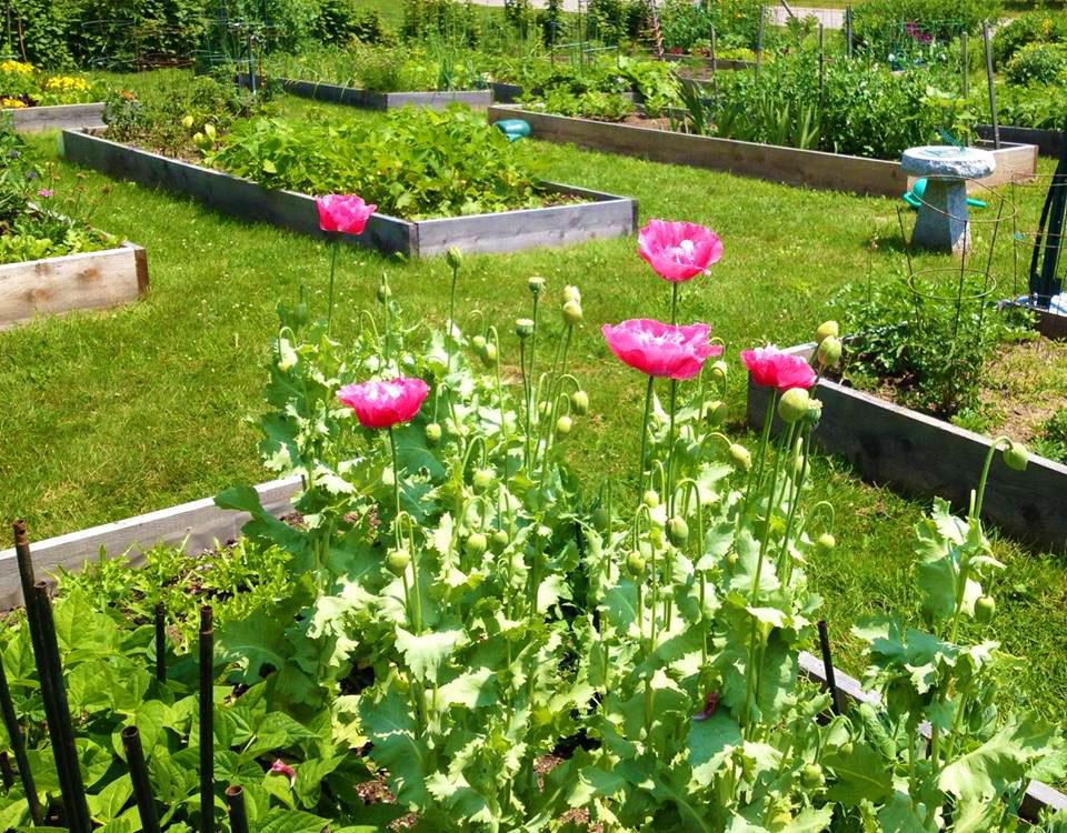 Community Garden in Bloom