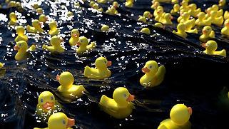 ducks floating.jpg
