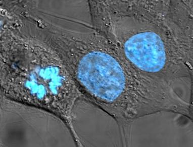 Científicos observan células vivas respondiendo a campos magnéticos