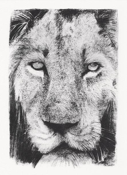 RegineSarallier-animals 6.jpg