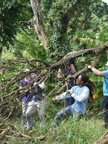 Moving tree limbs following the hurricane damage