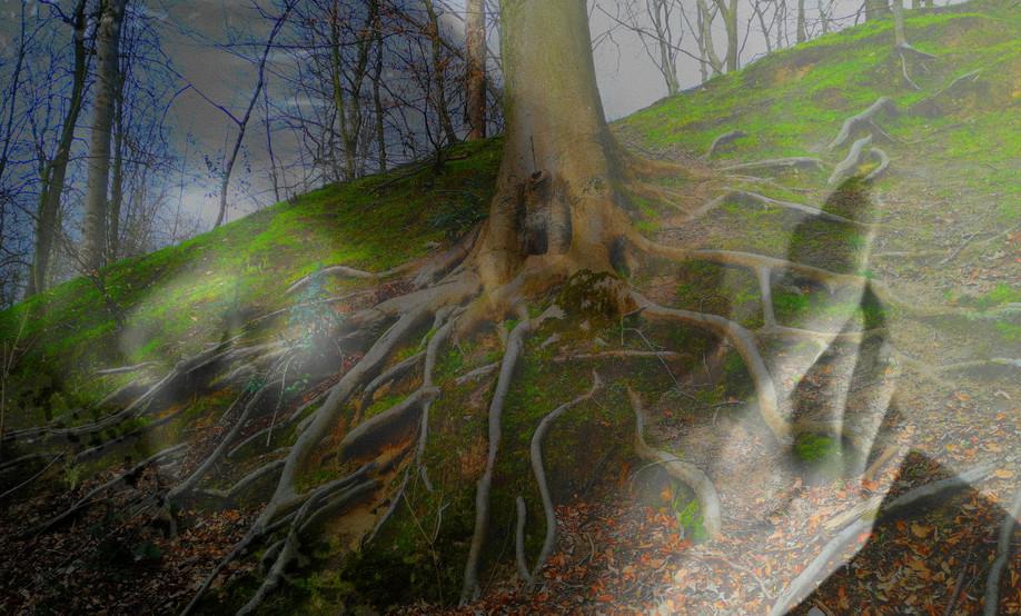AM Tree.jpg
