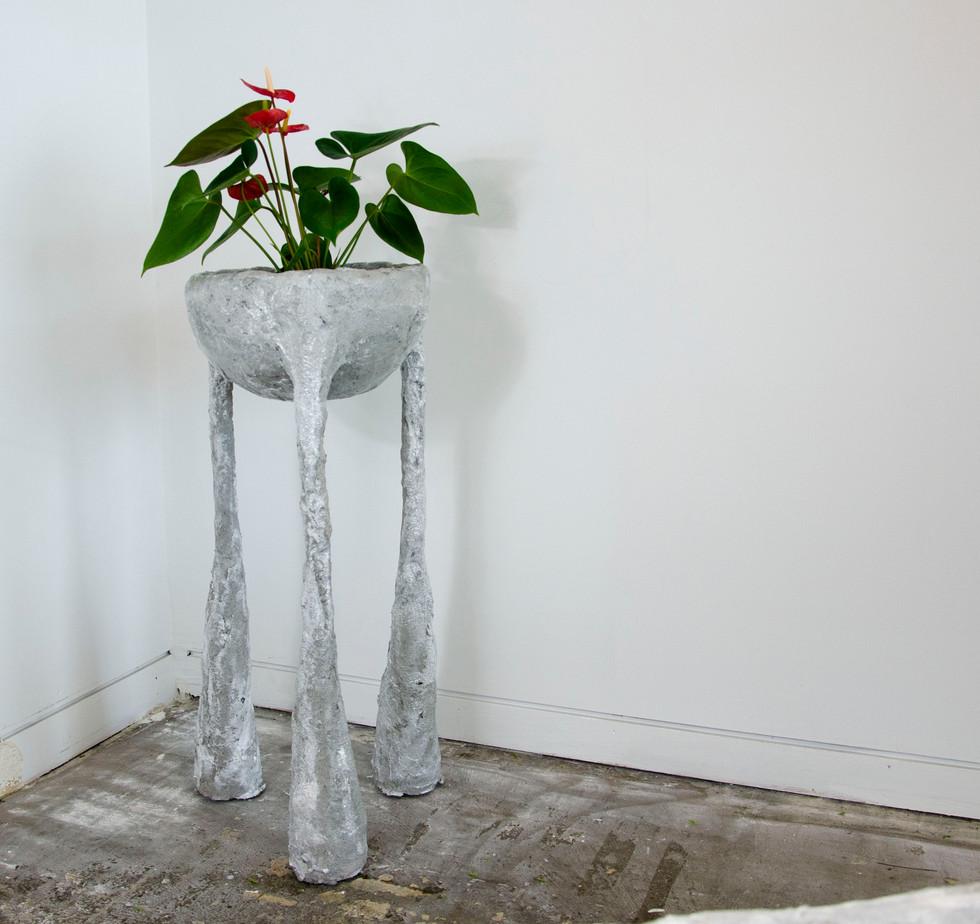 Planterjpg