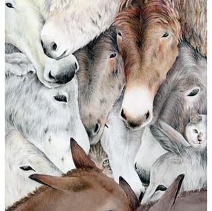 Lucy's Donkey Sanctuary
