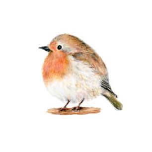 colorbird.jpg